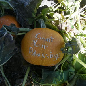 Even when farming is hard  we remember to count our blessings, there are always a lot of them!