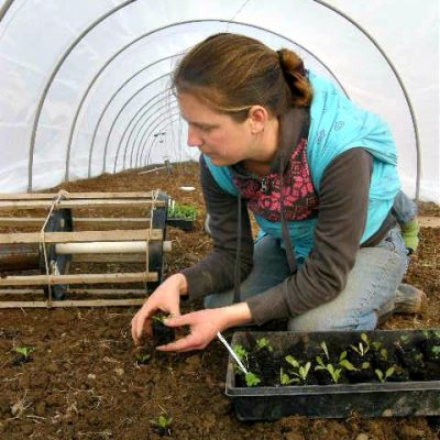 Transplanting starts into the hoophouse with Matthew on my back in the woven wrap.