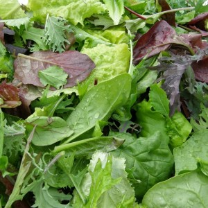 simplegiftsfarmmildsalad1